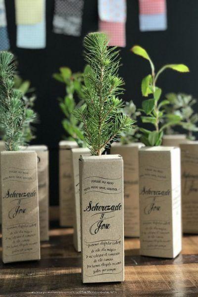 regalo para invitados ecológicos mini plantones árbol