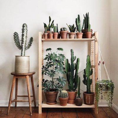 5 consejos para decorar con nuestras plantas