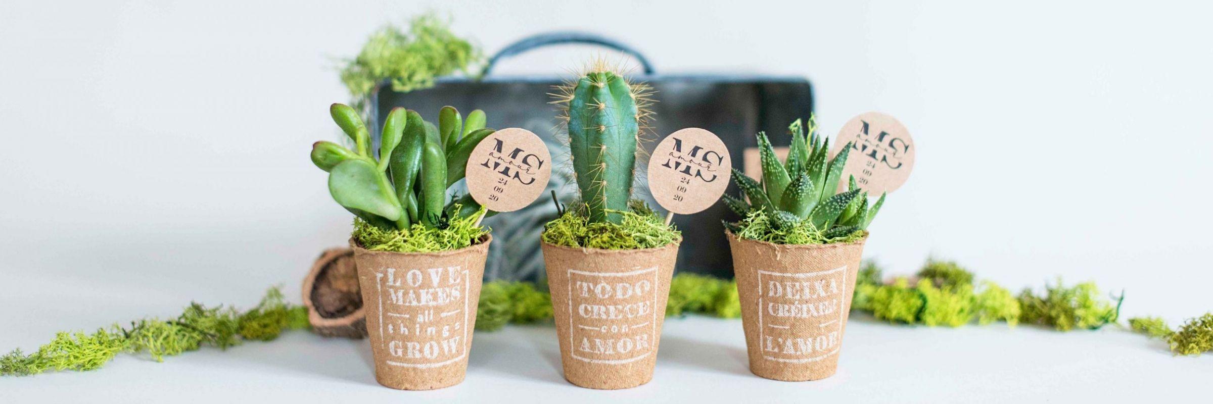 2020_01_17_miranda_green_mini_cactus_biodegradable_nuevo_estampado_idiomas_1